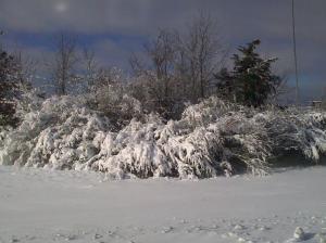 Columbus Snow