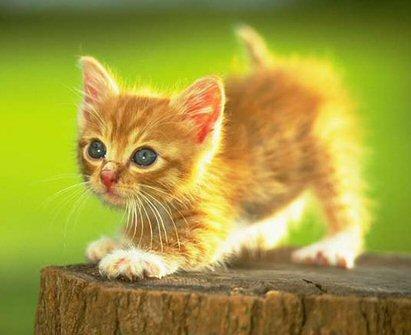 Obligatory cute kitty pic.