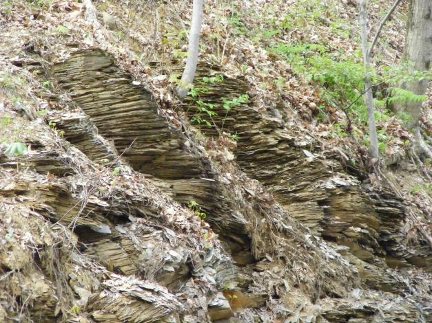 The shale layers.