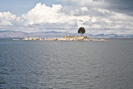 Lonely Island Tree